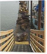 Dock Sea Lions Astoria Or 1 A Wood Print