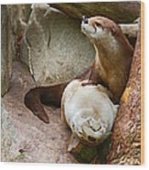 Doctor Otter At The Western North Carolina Nature Center Wood Print