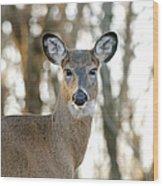 Doe A Deer A Female Deer Wood Print