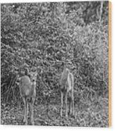 Doe A Deer Bw Wood Print