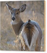 Doe A Deer Wood Print