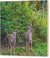Doe A Deer Wood Print