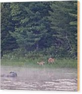 Doe And Fawn In The Early Morning Wood Print