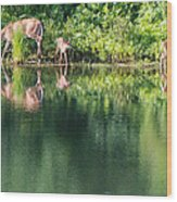 Doe And Fawns At The Pond Wood Print