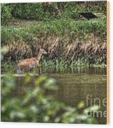 Doe Crossing The River Wood Print