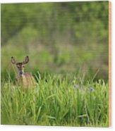 Doe Feeding On Prairie Iris, Grimes Wood Print
