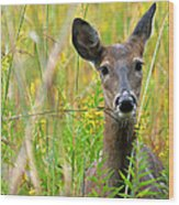 Doe In Morning Dew Wood Print