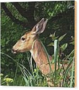Doe In Tall Grass Wood Print