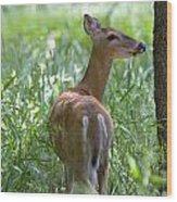 Doe Meadow Wood Print