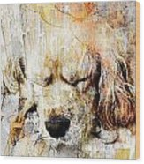 Dog 391-08-13 Marucii Wood Print