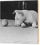 Dog And Ball Wood Print