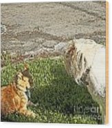 Dog And Cat Discuss Wood Print by Artist and Photographer Laura Wrede