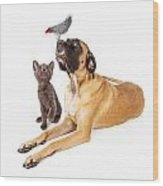 Dog And Cat Looking At A Bird Wood Print by Susan Schmitz