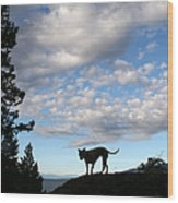 Dog And Sky Wood Print