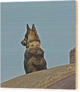 Dog At Point Bonita Wood Print