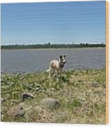 Dog At The Lake Wood Print