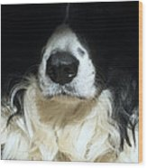 Dog Close Up Wood Print