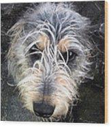 Dog Head Wood Print