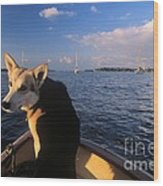 Dog In A Dingy At Put-in-bay Harbor Wood Print