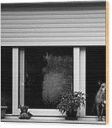 Dog In A Window Wood Print by Fabrizio Troiani