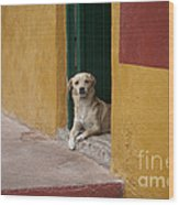 Dog In Colorful Mexican City Wood Print