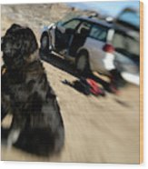 Dog In Front Of A Climbers Car Wood Print