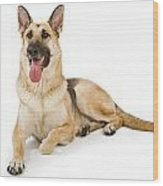 Dog Isolated On White Wood Print by Susan Schmitz