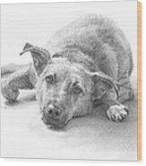 Dog Lazing Pencil Portrait Wood Print