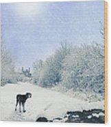 Dog Looking Back Wood Print