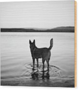 Dog Looking Over Abiquiu Reservior Wood Print