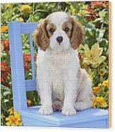 Dog On Blue Chair Wood Print
