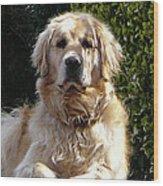 Dog On Guard Wood Print