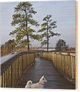 Shiba Inu On Path Wood Print