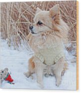 Dog Playing In Snow Wood Print