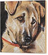 Dog Portrait Drawing Wood Print