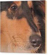 Dog Portrait Wood Print