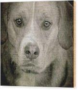 Dog Posing Wood Print