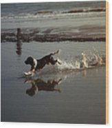 Dog Running Wood Print by John Magnet Bell