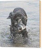 Dog Shake Wood Print