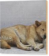 Dog Sleeping Wood Print