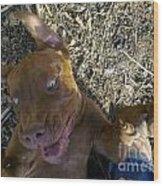 Dog Smile Wood Print
