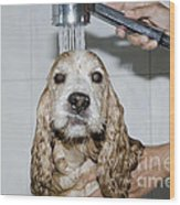 Dog Taking A Shower Wood Print