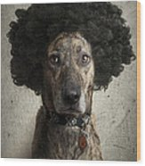 Dog With A Crazy Hairdo Wood Print