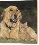 Dog With Kitten Wood Print by Rolf Kopfle