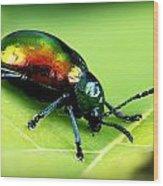Dogbane Beetle Wood Print