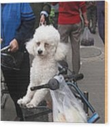 Doggie In The Basket Wood Print