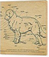 Doggy Diagram Wood Print by Tom Mc Nemar