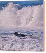Dogs At Carmel California Beach Wood Print