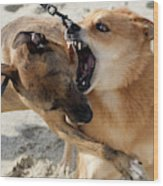 Dogs Fight On The Beach In Emerald Wood Print