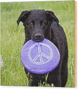 Dogs For Peace Wood Print